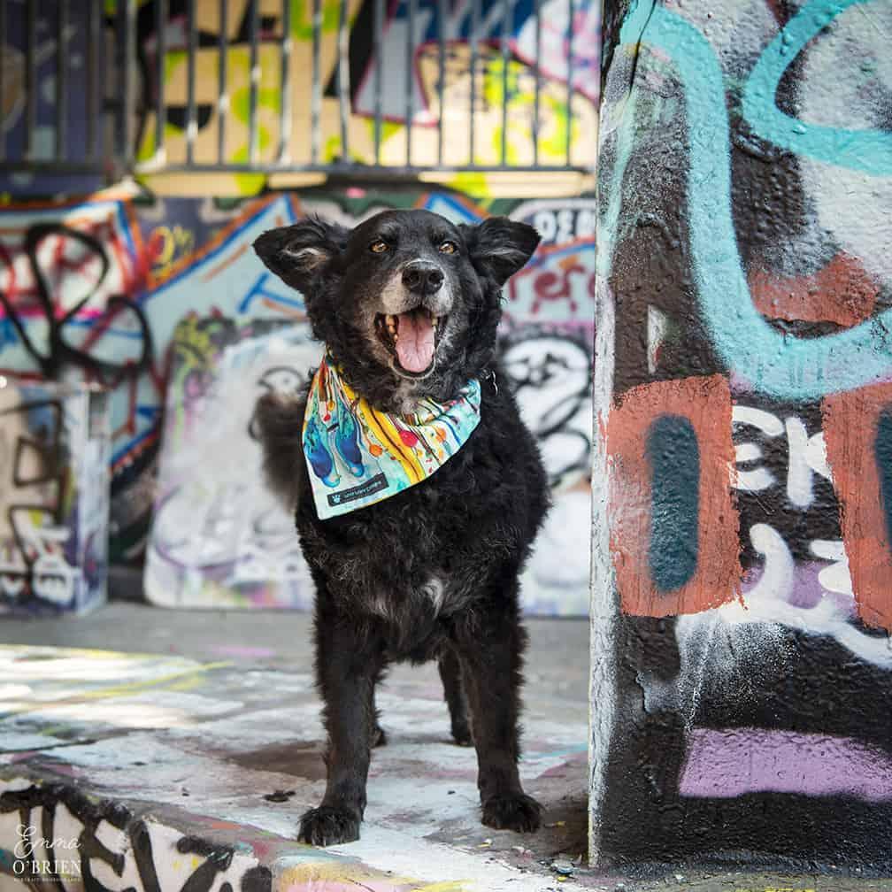 Belinha London Dog Photo Shoot with Emma OBrien_0146