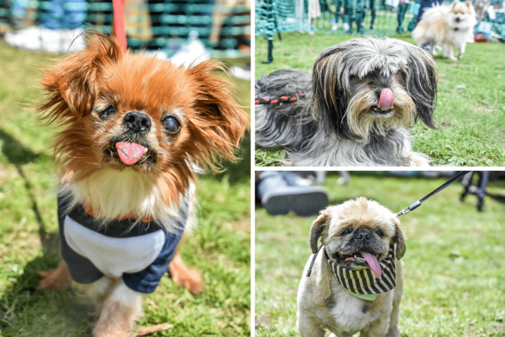 Best Tongue Out - Great Hampstead Bark Off 2017
