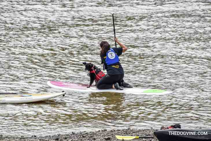 Dog and Human Paddle Boarding 00007