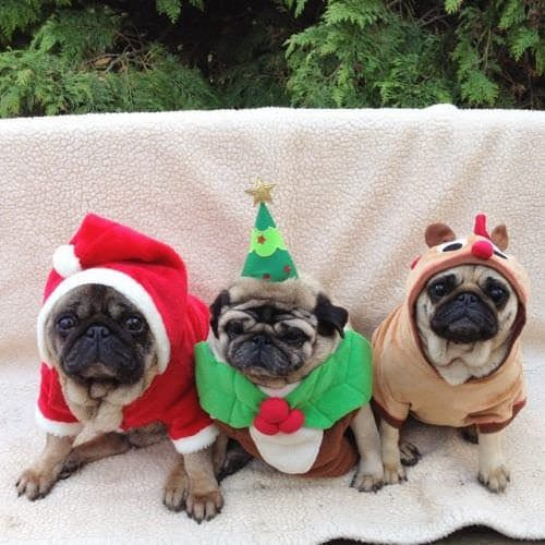 December 2017 Events Agenda For London Dogs - Pugs & Pals Christmas Party