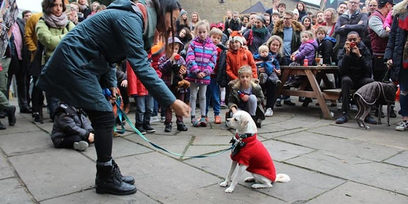 December 2017 Events Agenda For London Dogs - Sylvan Post Festive Pooch Parade