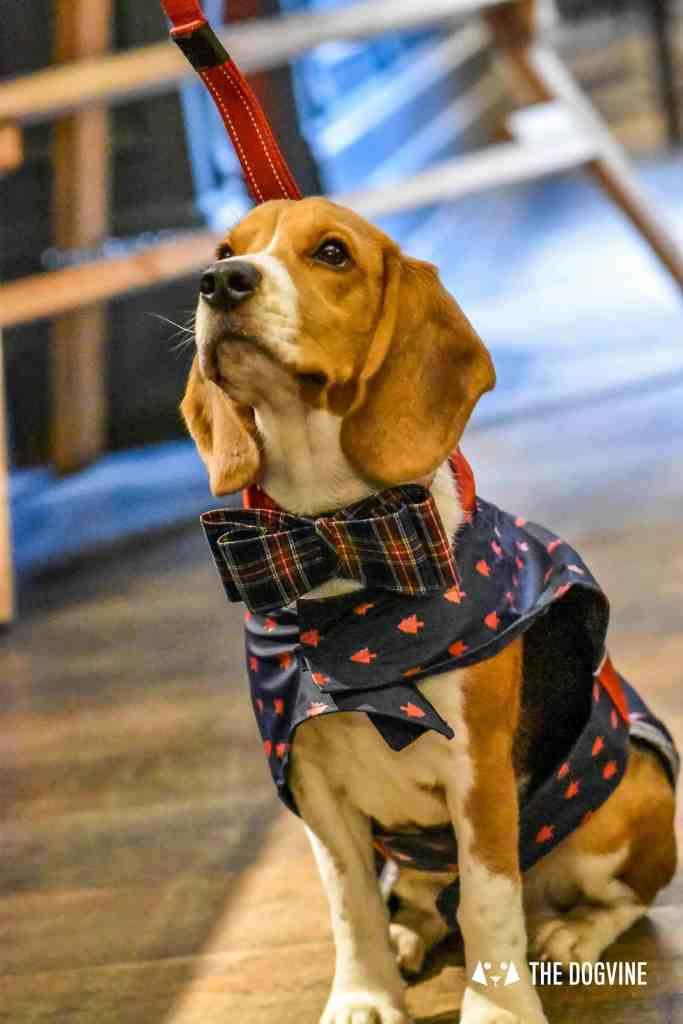 Canine Christmas Crackers at The Windmill Clapham 33