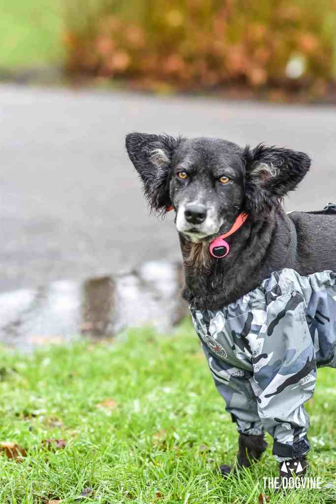 The Dogvine - Dog Trousers Review 17