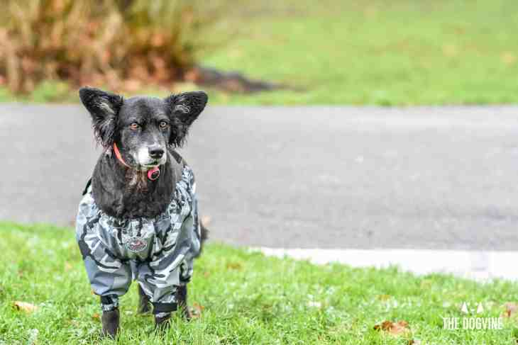 The Dogvine - Dog Trousers Review 18