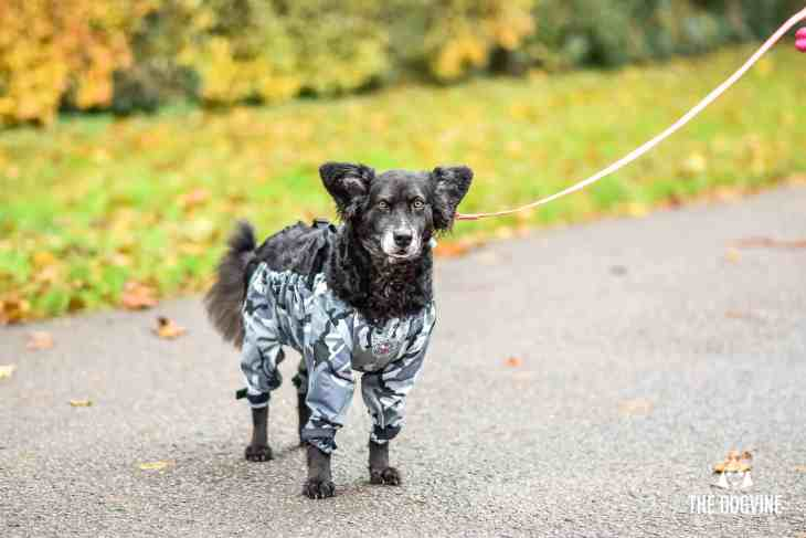 The Dogvine - Dog Trousers Review 23