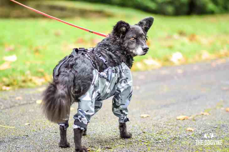 The Dogvine - Dog Trousers Review 4