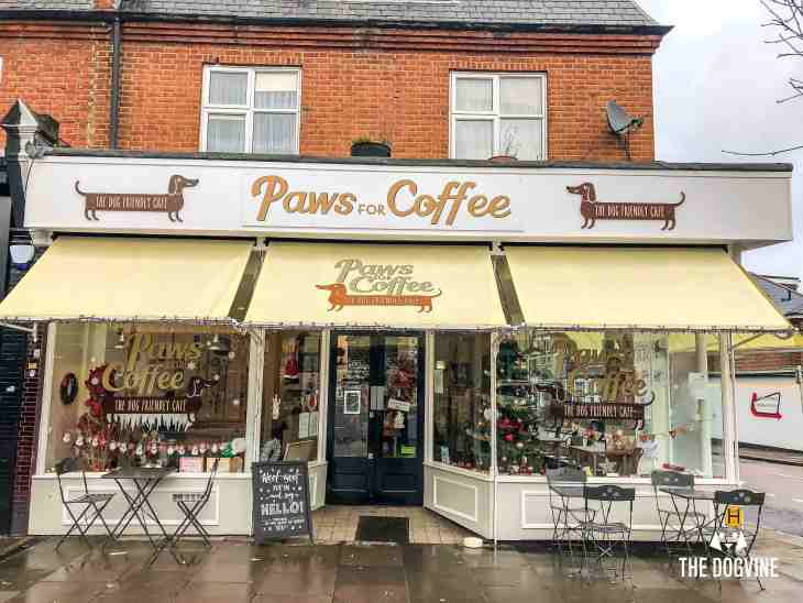 Dog-Friendly Cafe - Paws for Coffee Sheen 14