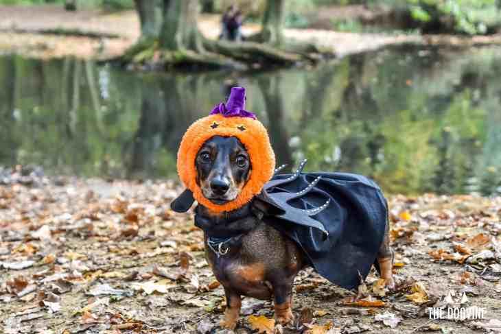 London Dog Events 2018 - All Dogs Matter Halloween Walk 2018