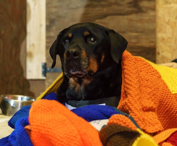 Mayhew Helps Dogs Of The Homeless At Crisis At Christmas Survivor who was born at Crisis at Christmas nine years ago