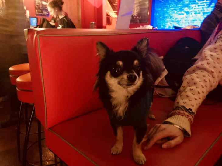 London Gets A New Dog-Friendly Cinema At Whirled Brixton 12