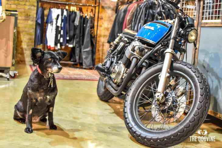Dog-Friendly Shoreditch Mutts and Motorcycles At The Bike Shed 20