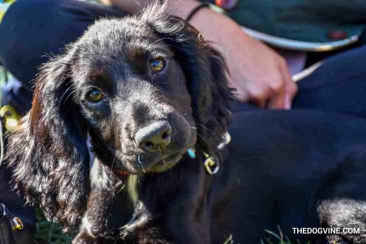 The London Dog Meetups Guide For You And Your Dog - Things to Do With Your Dog 3