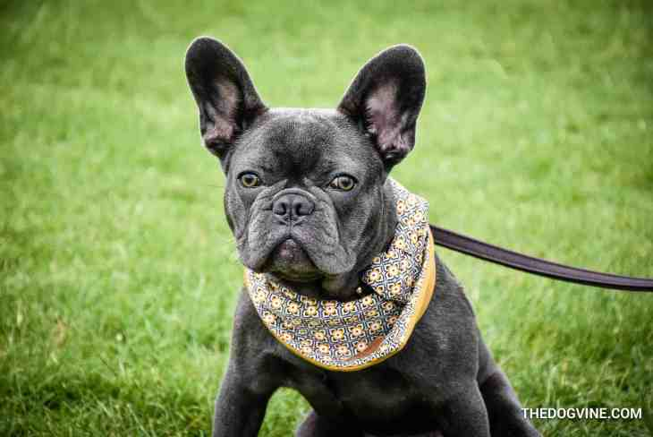 The London Dog Meetups Guide For You And Your Dog - Things to Do With Your Dog 9