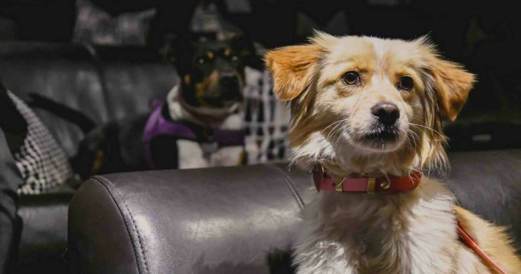 Dog-Friendly Cinema At The Exhibit  | Puppy Love Brunch Review