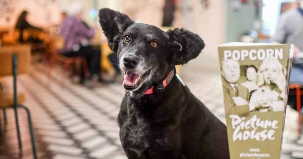 London Dogs Are Loving Picturehouse Central Dog-Friendly Cinema