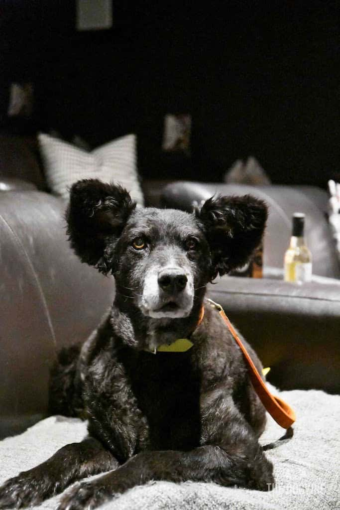London Dog-Friendly Cinema At The Exhibit Puppy Love Brunch Review 19