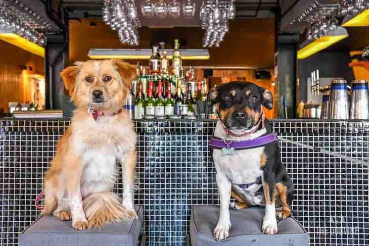 London Dog-Friendly Cinema At The Exhibit Puppy Love Brunch Review 20