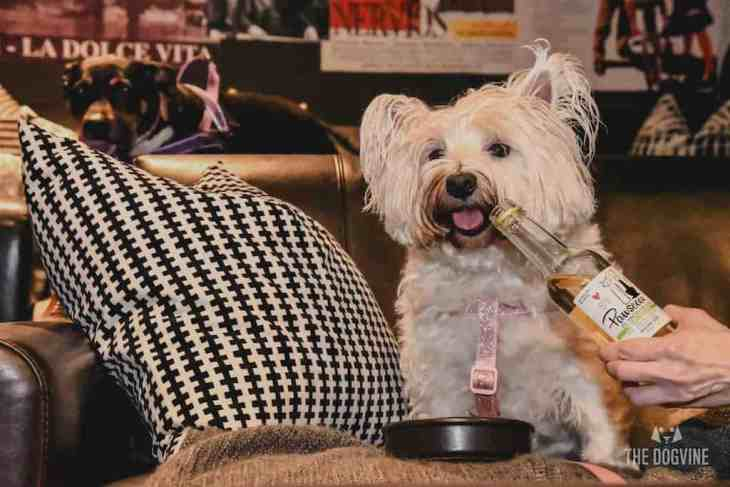 London Dog-Friendly Cinema At The Exhibit Puppy Love Brunch Review 32