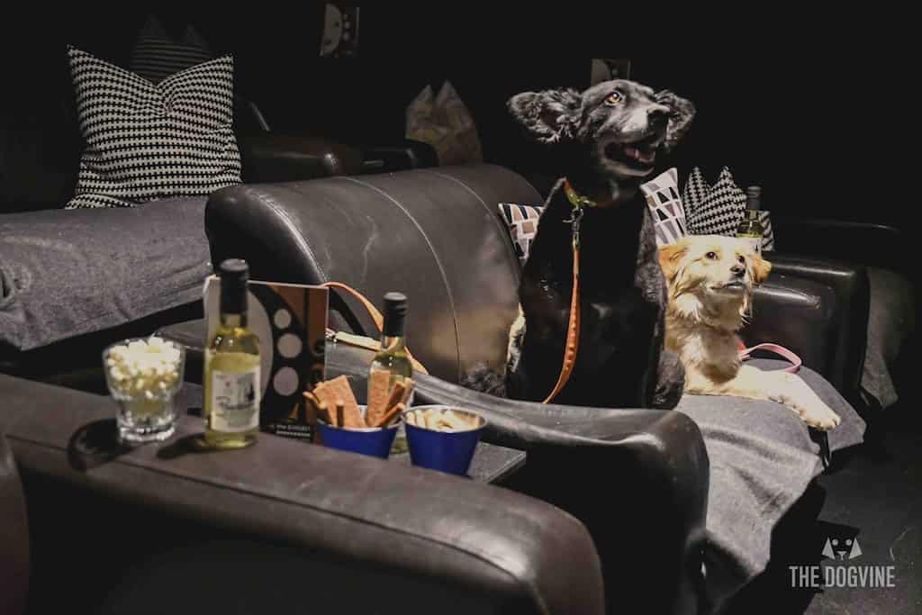 London Dog-Friendly Cinema At The Exhibit Puppy Love Brunch Review 5