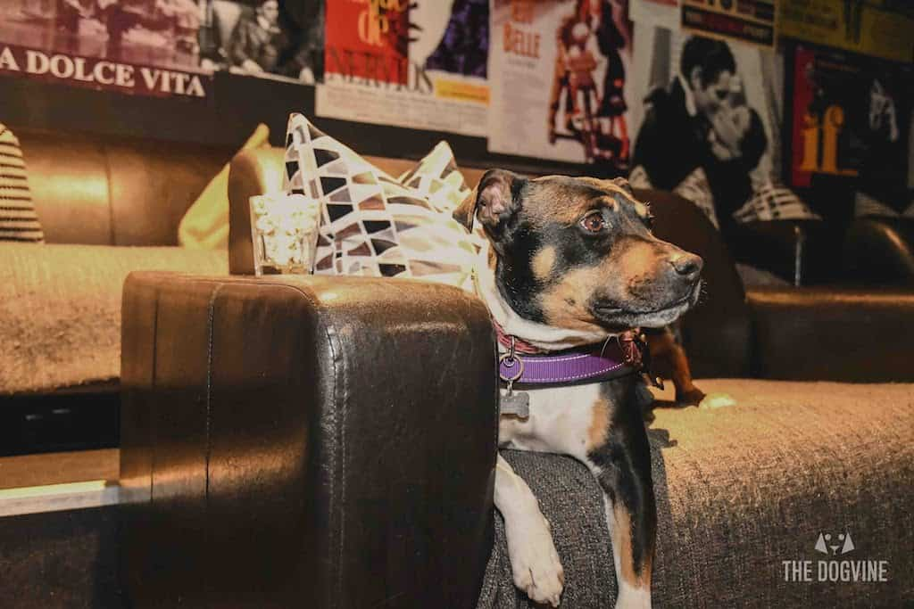 London Dog-Friendly Cinema At The Exhibit Puppy Love Brunch Review 7