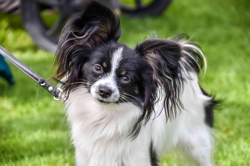 London Dog Show - Grove Park Carnival & Chinbrook Dog Show - London Dog Events