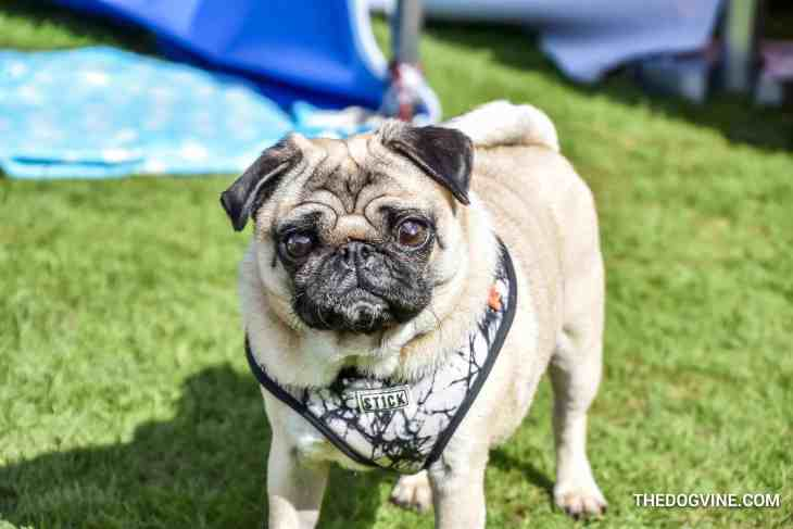 17 Of The Best Things To Do In London For Dogs | May 2018 - Primrose Hill Festival Dog Show 2018