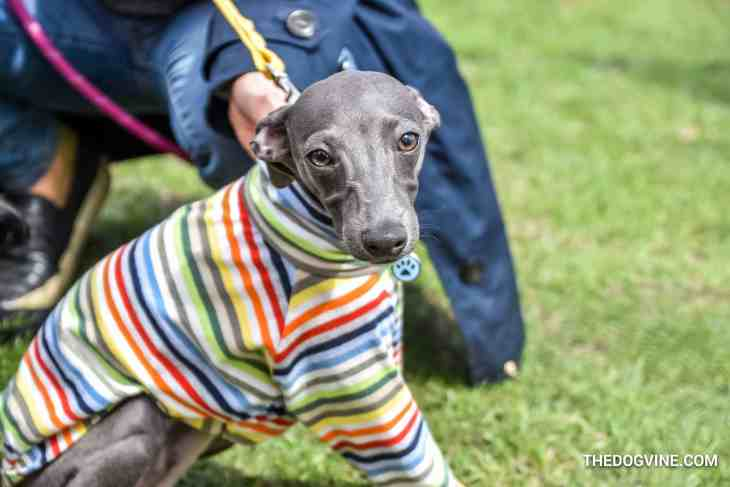 17 Of The Best Things To Do In London For Dogs | May 2018 - Richmond Mayfair Dog Show 2018
