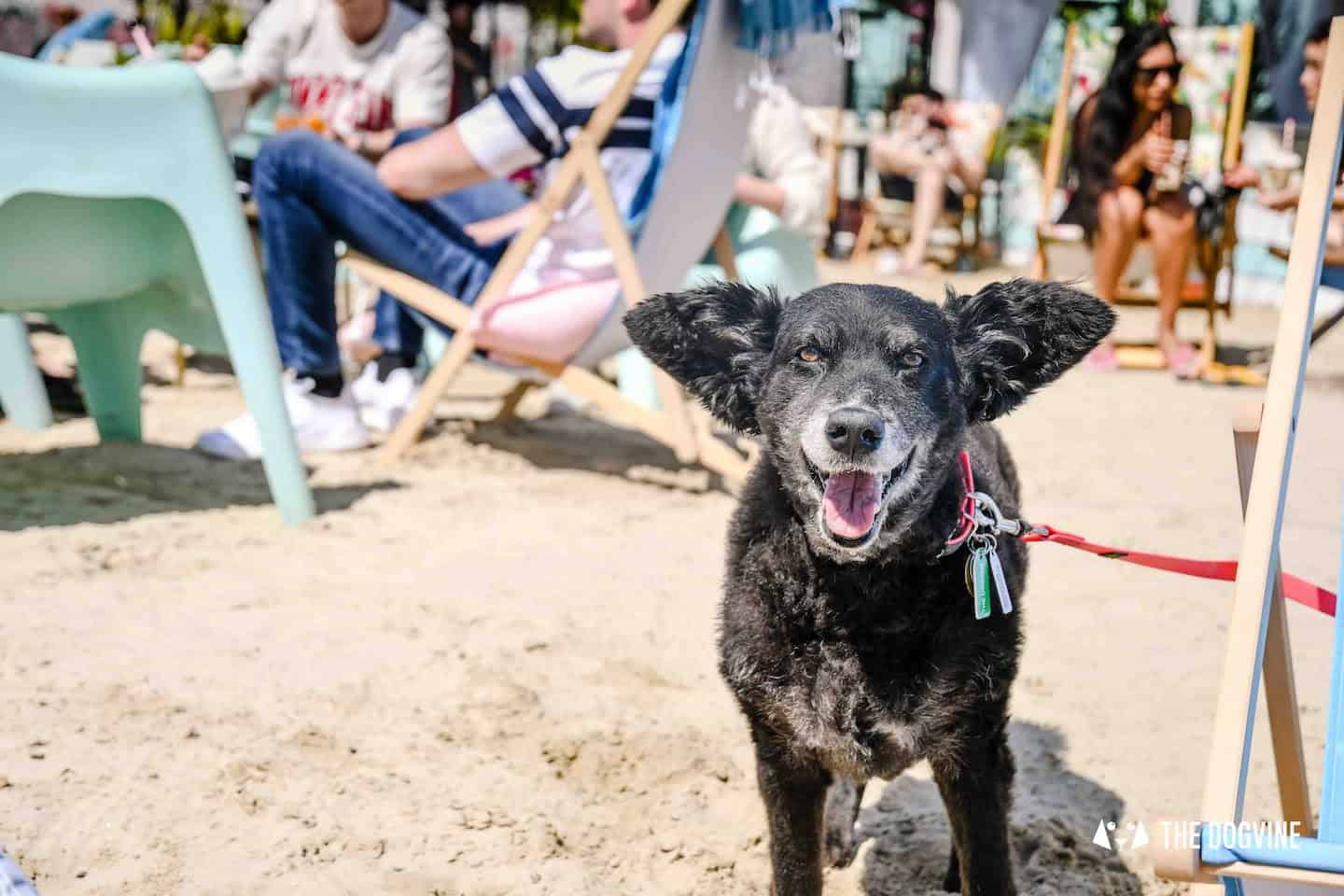 Dog-Friendly Neverland Beach Club - All You Need To Know 38