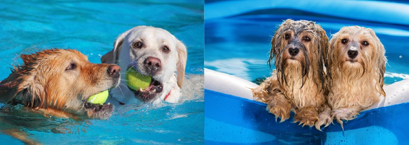 London Dog Events - THE POOCH PAWTRAIT AND POOL PARTY AT M VICTORIA