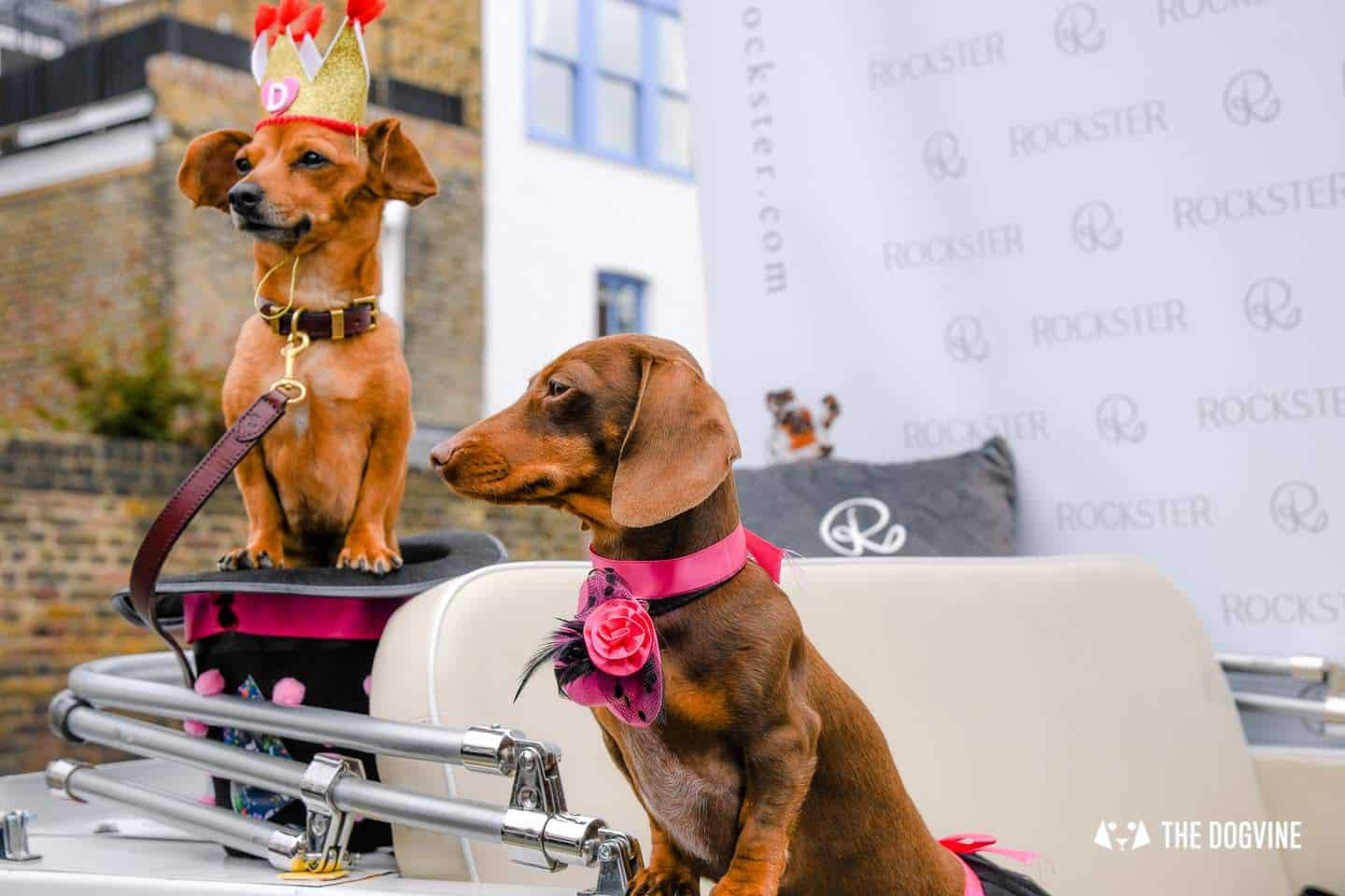 London's Best Dressed Dachshunds At Sausage Social London The Mad Hatters Tea Party 96