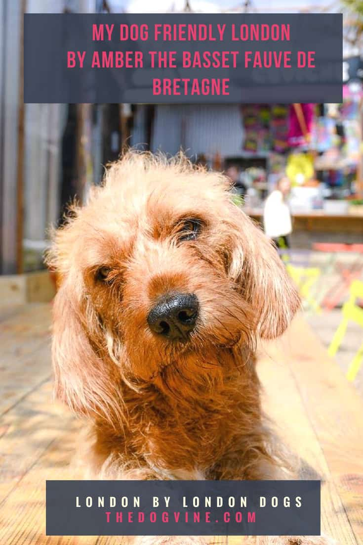 My Dog Friendly London by Amber the Basset Fauve de Bretagne Cover