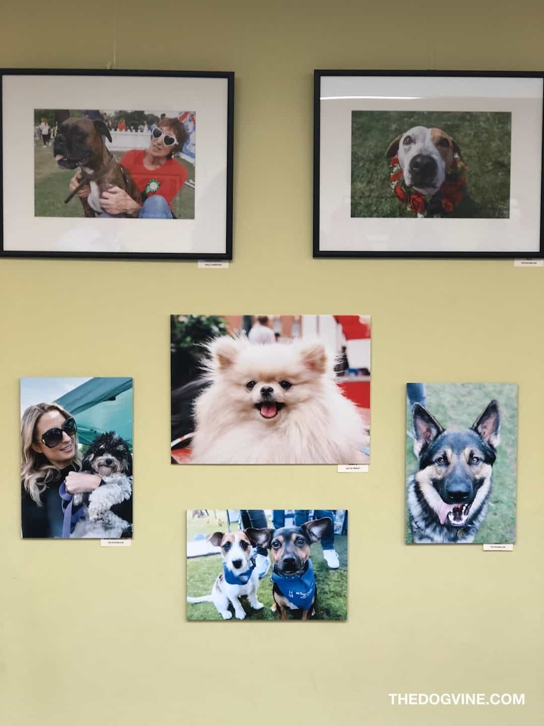 Year of The (Rescue) Dog Photo Exhibition 55