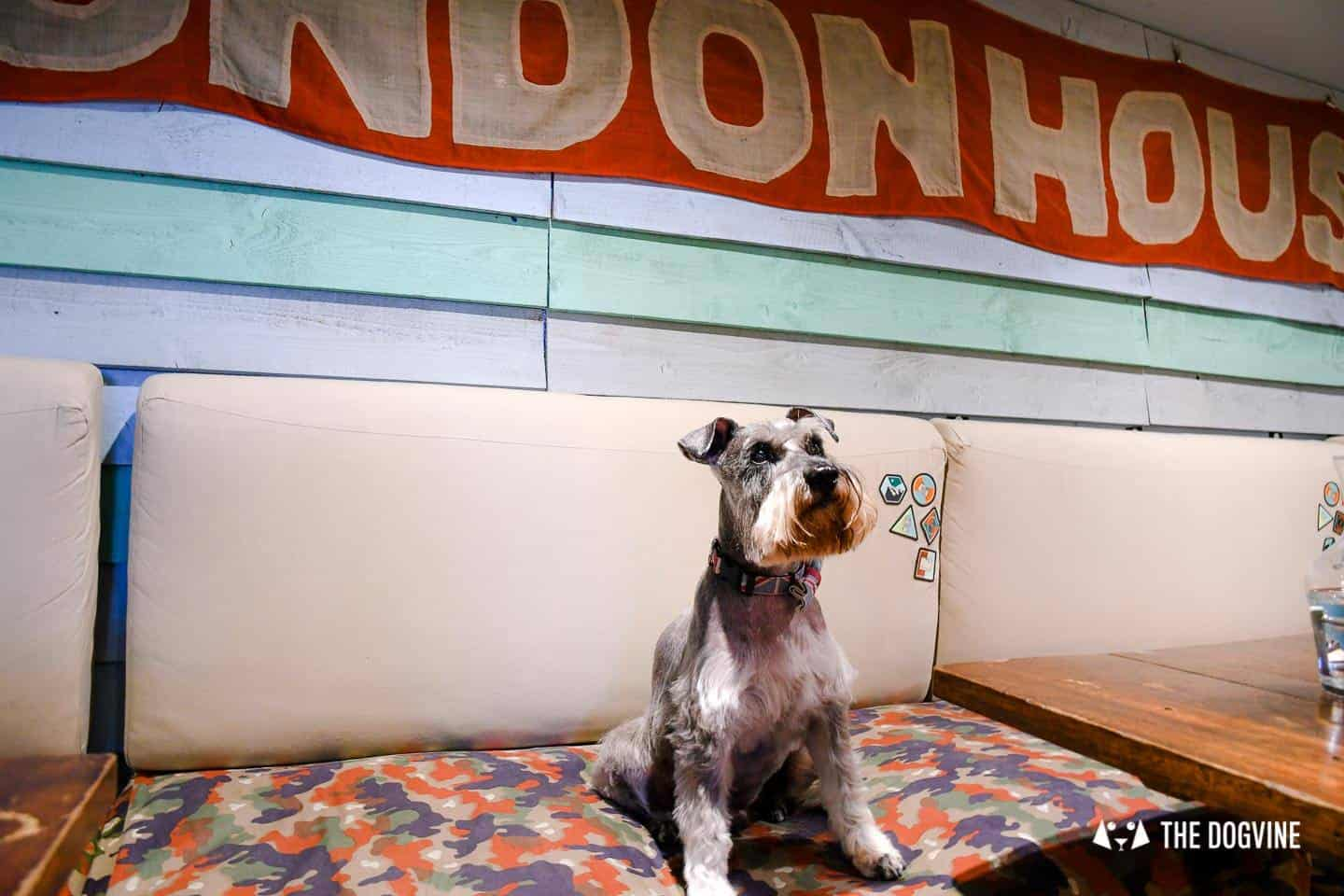 My Dog Friendly London By Pepper Chung the Schnauzer - Dog Friendly Notting Hill 1