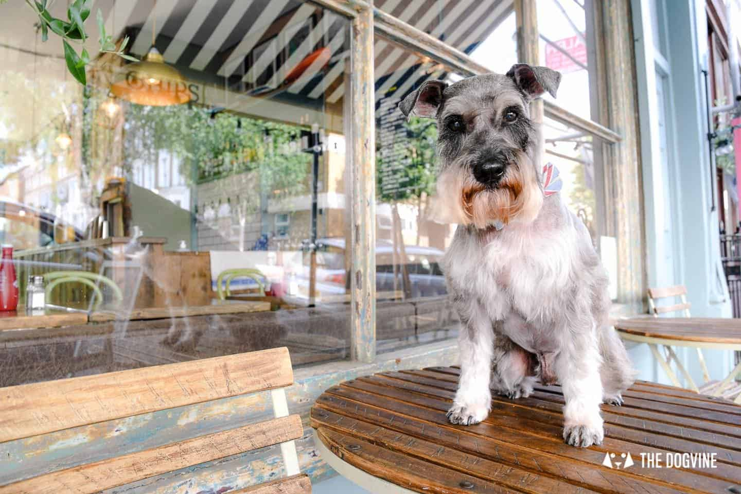 My Dog Friendly London By Pepper Chung the Schnauzer - Dog Friendly Notting Hill 8