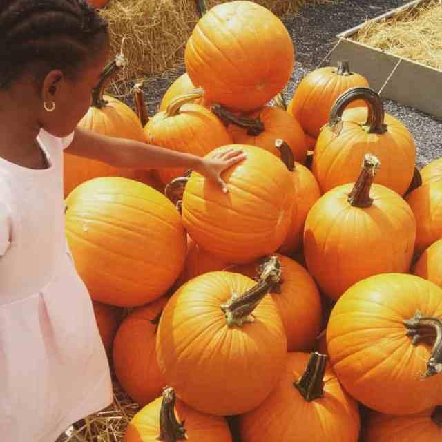 girl touching pumpkin 900x900