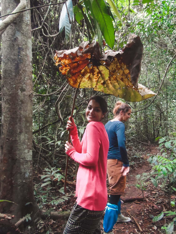 Dorie im Khai Yai Nationalpark mit Blatt-Schirm