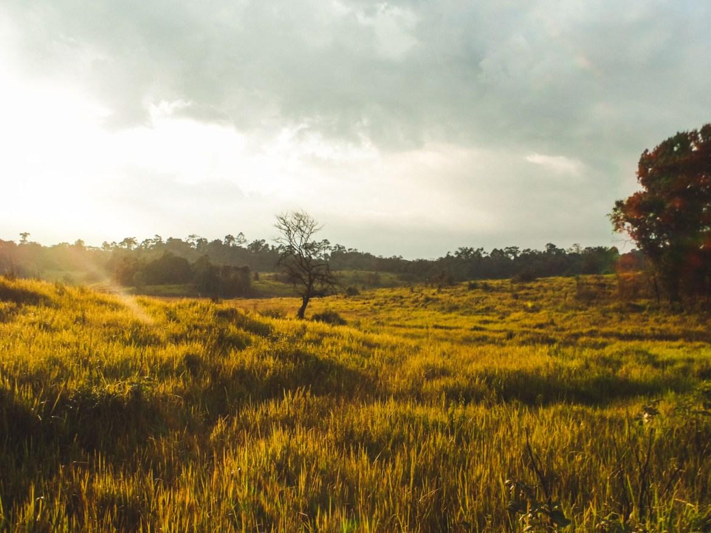Landschaft im Khao Yai NAtionalpark