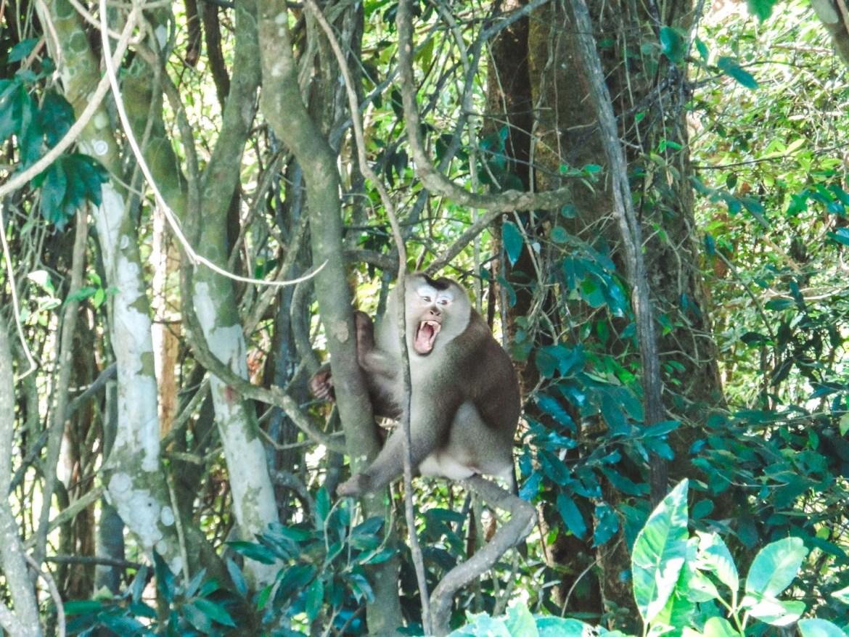 Affe im Khao Yai Nationalpark