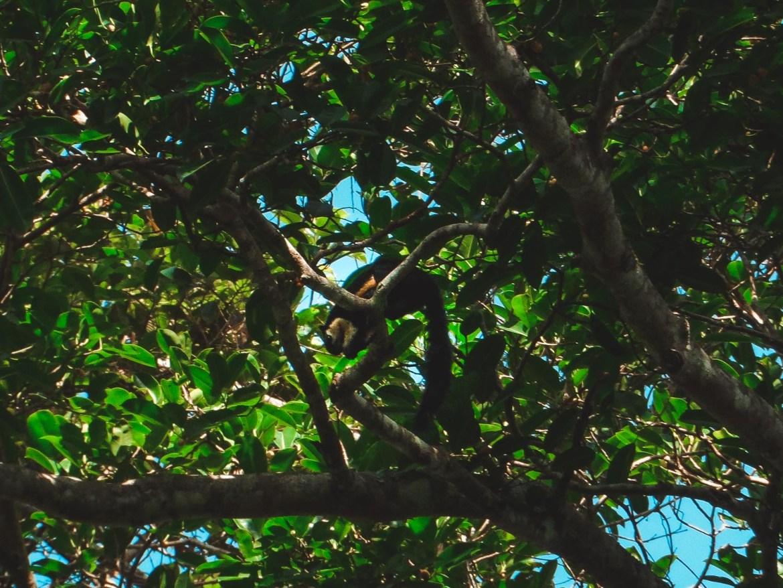 Tier im Khao Yai NAtionalpark
