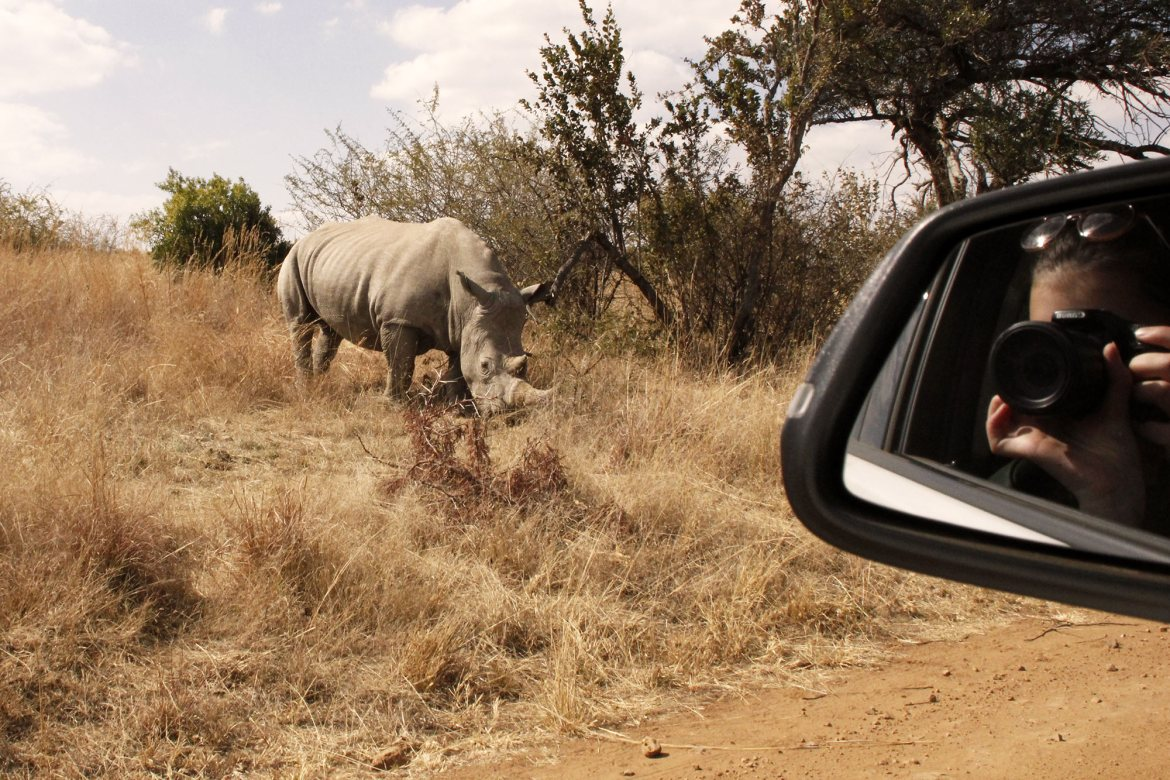 A Rhino in the landscape and dorie reflects in the mirror of the car