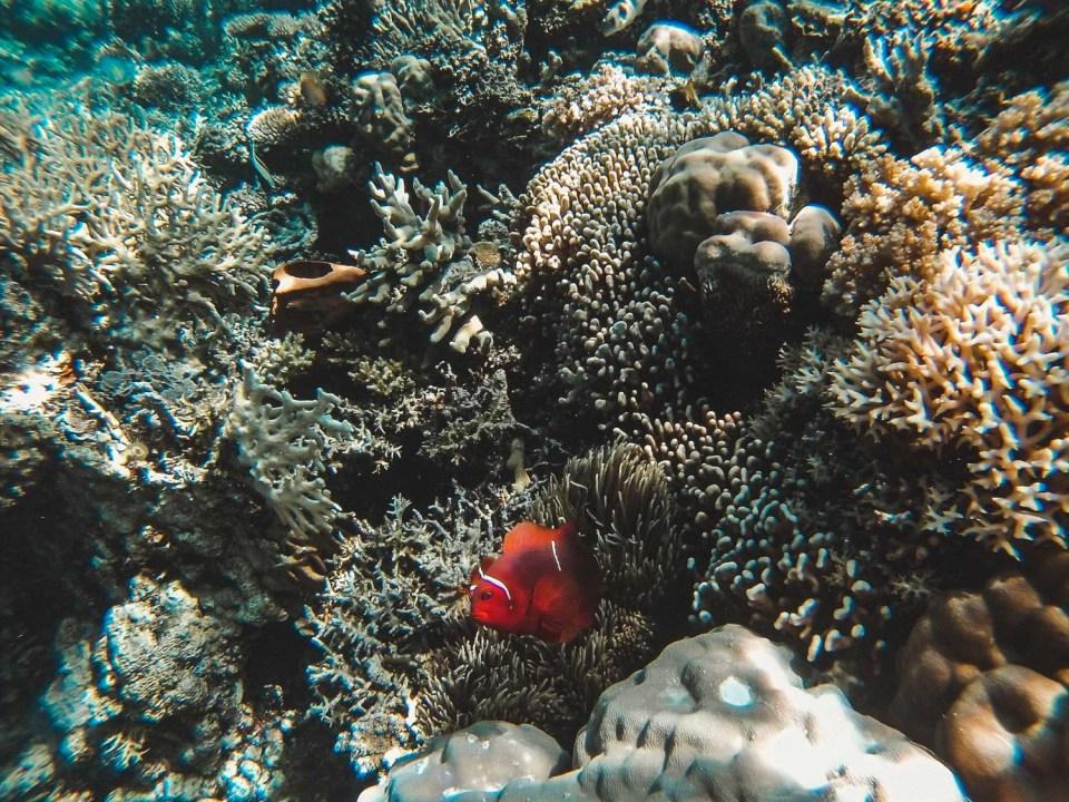 Unterwasserwelt der Togian Islands