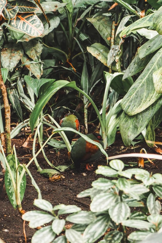 Hühner in den Blumengärten Hirschstetten
