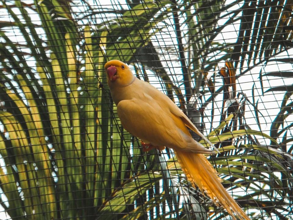 Kuala Lumpur Sehenswürdigkeiten: Birdpark