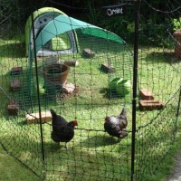 Chic Chicken Fencing
