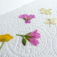 Pressed Flower Envelope Seals