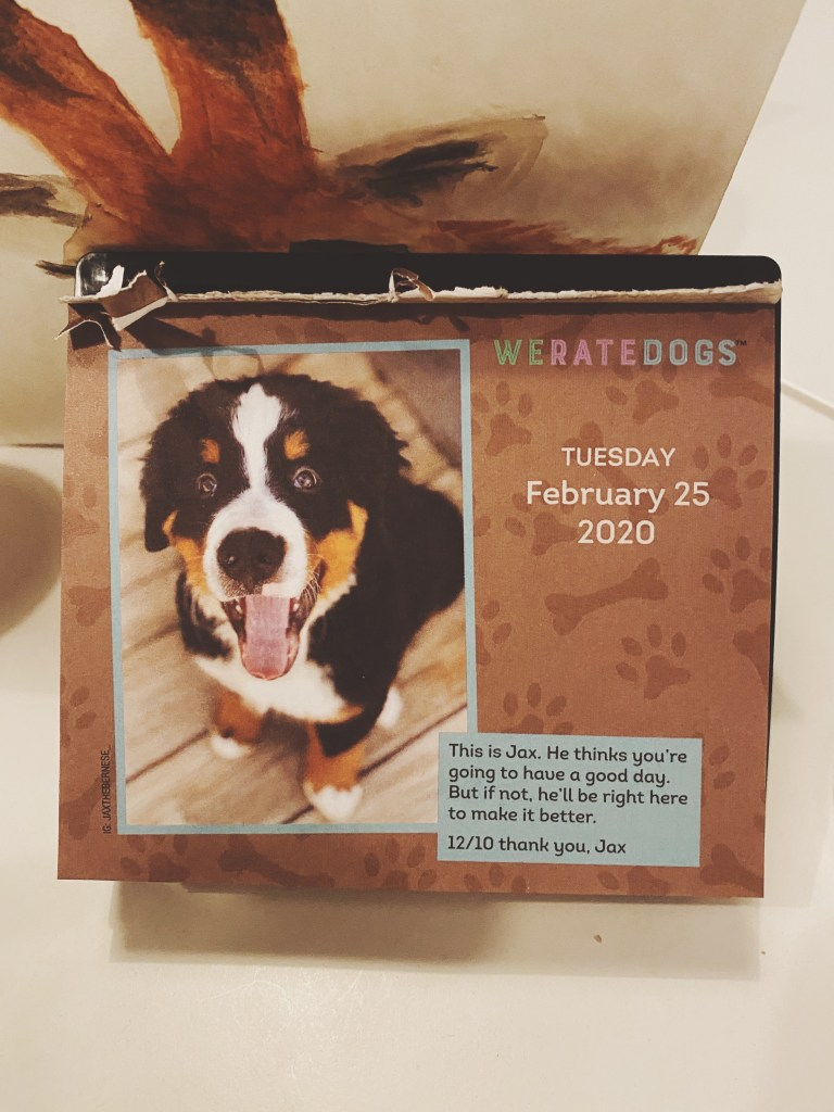 we rate dogs calendar