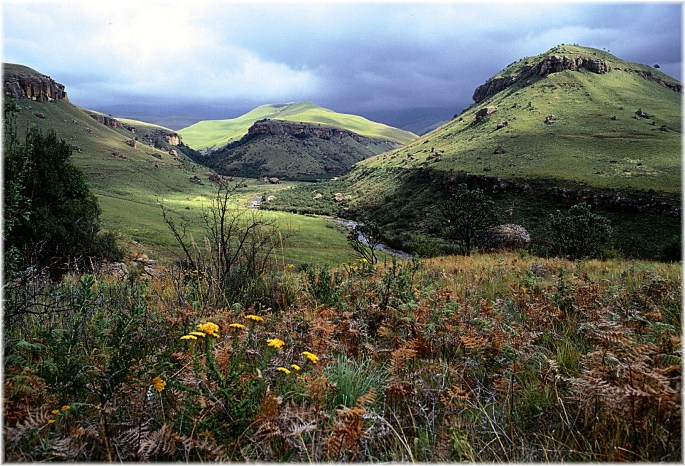 Drakensberg's Unique Flora and Fauna