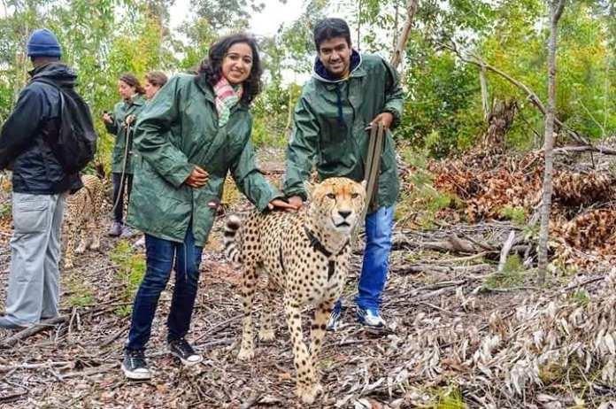 Cheetah walking south africa