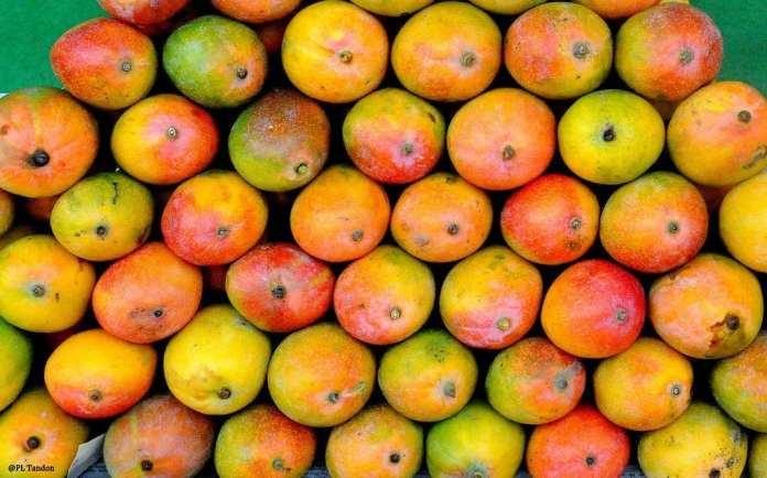 mangoes healthy fruits
