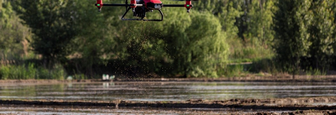 rice planting drone
